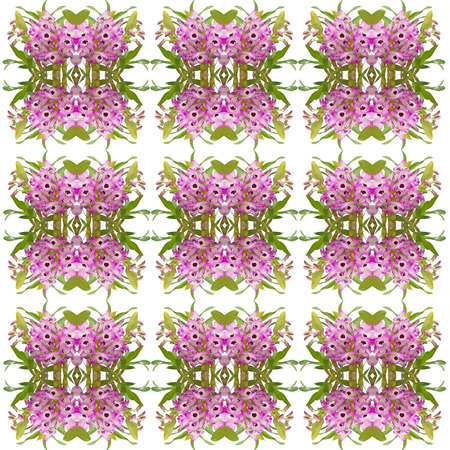 orchid house: nobile orchid seamless pattern background