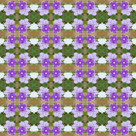 Brunfelsia Australis (Yesterday today and tomorrow flower) seamless pattern background