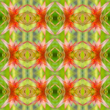 guzmania: Bromeliad guzmania seamless pattern background