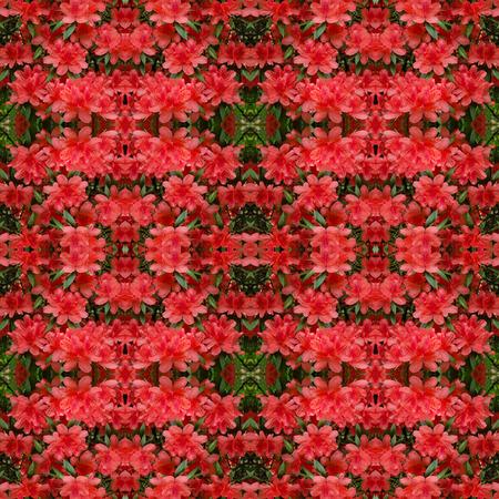 coy: Azalea flower seamless pattern background