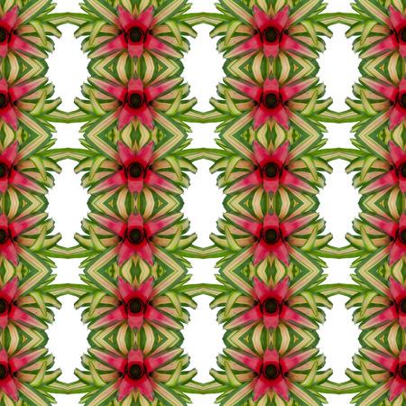 neoregelia: Bromeliad flower seamless pattern background
