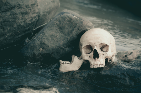 streamlet: still life of human skull in streamlet