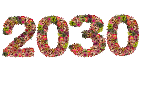 neoregelia: New year 2030 made from bromeliad flowers isolated on white background Stock Photo