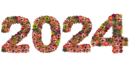 neoregelia: New year 2024 made from bromeliad flowers isolated on white background Stock Photo