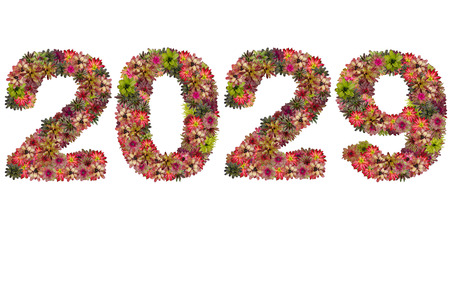 neoregelia: New year 2029 made from bromeliad flowers isolated on white background