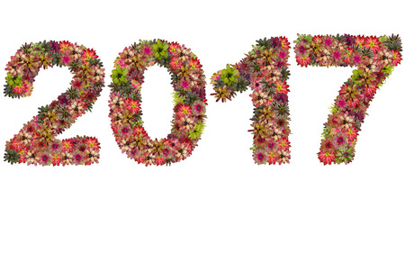 neoregelia: New year 2017 made from bromeliad flowers isolated on white background