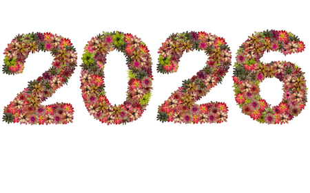 neoregelia: New year 2026 made from bromeliad flowers isolated on white background