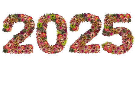 neoregelia: New year 2025 made from bromeliad flowers isolated on white background Stock Photo