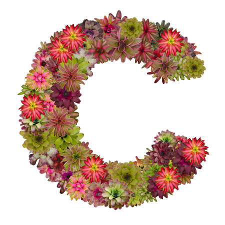 neoregelia: letter C made from bromeliad flowers isolated on white background