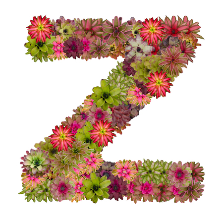 neoregelia: letter Z made from bromeliad flowers isolated on white background Stock Photo