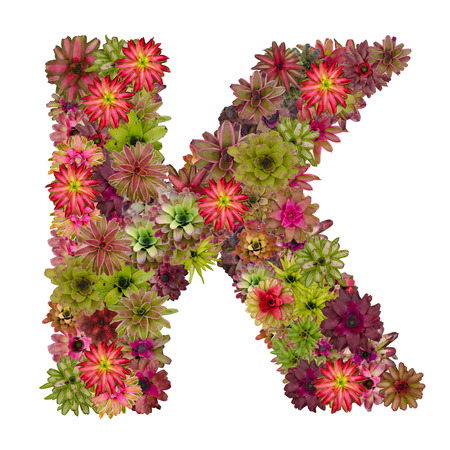 neoregelia: letter K  made from bromeliad flowers isolated on white background Stock Photo