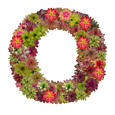 neoregelia: letter O made from bromeliad flowers isolated on white background Stock Photo