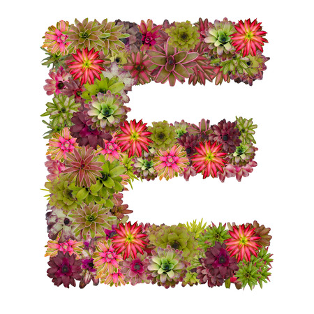 neoregelia: letter E made from bromeliad flowers isolated on white background