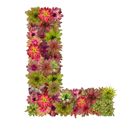 neoregelia: letter L made from bromeliad flowers isolated on white background