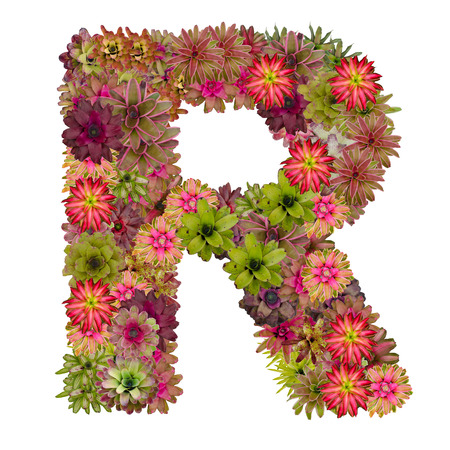neoregelia: letter R made from bromeliad flowers isolated on white background