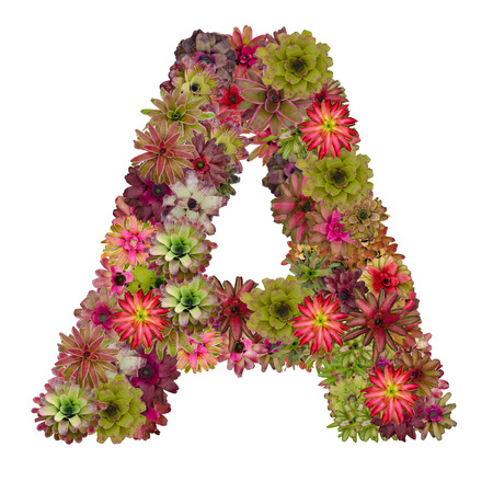 neoregelia: letter A made from bromeliad flowers isolated on white background Stock Photo