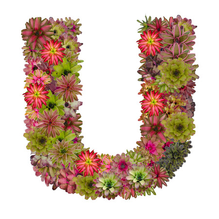 neoregelia: letter U made from bromeliad flowers isolated on white background Stock Photo