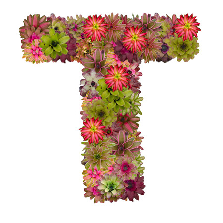 neoregelia: letter T made from bromeliad flowers isolated on white background