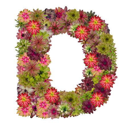 neoregelia: letter D made from bromeliad flowers isolated on white background