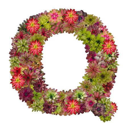 neoregelia: letter Q made from bromeliad flowers isolated on white background Stock Photo