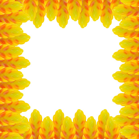 yeloow: Bromeliad frame flower isolated on white background