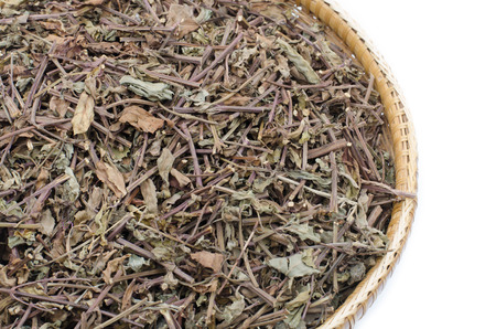 diuretic: Thai herb scientific name Orthosiphon aristatus isolated on white background