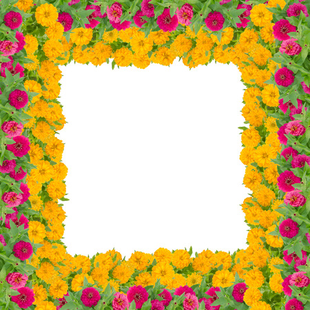De bloemkader van Zinnias op witte achtergrond, Rode en gele bloem wordt geïsoleerd die met blad bloeien Stockfoto