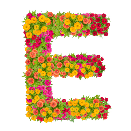 Letter E alphabet made from zinnia flower ABC concept type as logo.Typography design with clipping path