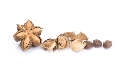 Plukenetia volubilis or sacha inchi peanut seed isolated on white background