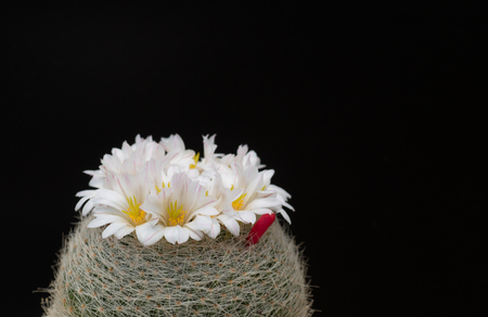 cactus in a pot on blackboard background, succulent plant 版權商用圖片