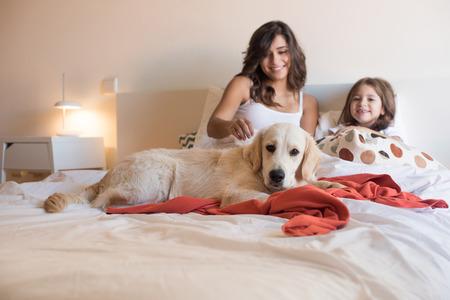 人間の家族の犬に焦点を当てるとベッドでゴールデン ・ レトリーバー子犬犬