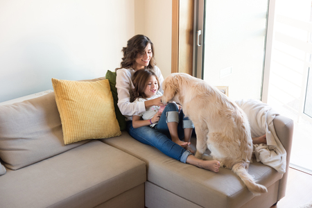 Golden Retriever Junior dog with her human family at home