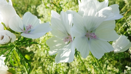 White Musk Flower