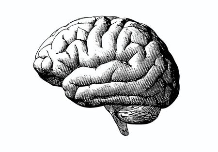 白い背景にグレースケール白黒色の脳イラストを彫刻  イラスト・ベクター素材