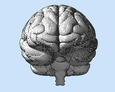 body dimensions: Black and white engraving brain illustration in front view on light blue background Illustration