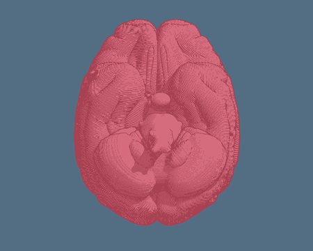 Pink engraving brain inferior view illustration isolated on blue Illustration