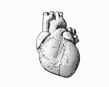 Monochrome engraving human heart illustration isolated on white background