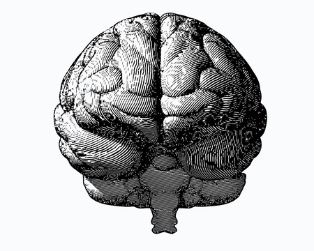 Monochrome engraving brain illustration in front view on white background