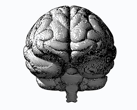 Ilustración de cerebro grabado monocromo en vista frontal sobre fondo blanco Foto de archivo - 84209046