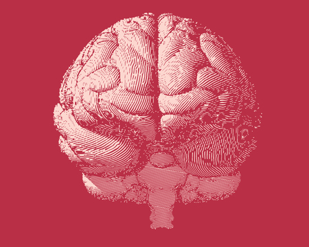 White engraving brain illustration in front view on red  background color Illustration