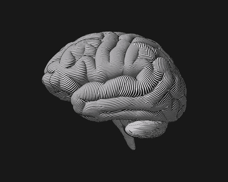 Monochrome engraving brain in lateral view illustration isolated on dark background