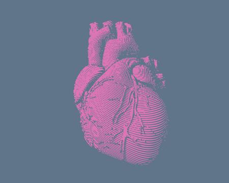 Engraving colorful pink human heart illustration on blue gray background Illustration