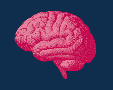 Red and pink engraving brain side view illustration old style on dark blue background