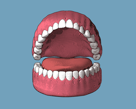Teeth and gum engraving with color illustration isolated on blue background Vettoriali