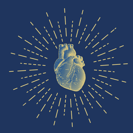 Gold engraving human heart illustration on dark blue background with shining star burst drawing