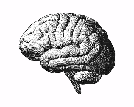 Monochrome engraving brain side view illustration old style on white background