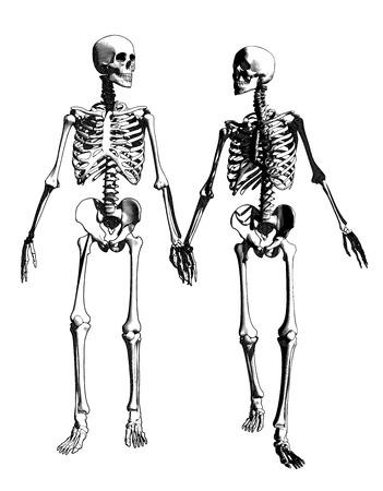 Una coppia di scheletro dell'incisione nella tenuta dell'illustrazione di azione della mano su fondo monocromatico di colore Archivio Fotografico - 97065054