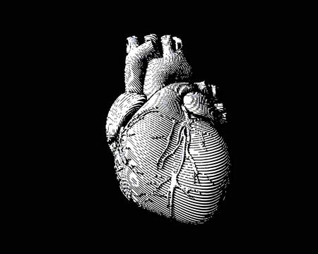 White engraving human heart illustration on monochrome dark background Illustration