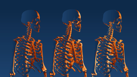 Orange low poly skeleton portrait side view on dark blue background Vectores