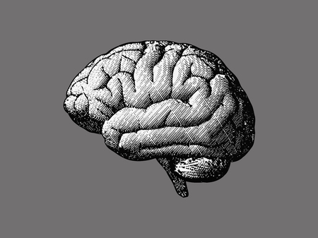 Side view brain engraving drawing illustration in monochrome isolated on gray BG Vectores